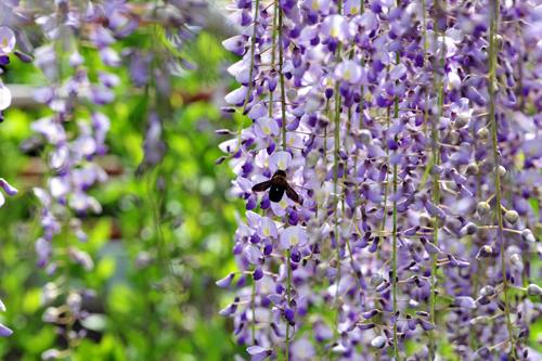 四月下旬になると、いつも思いを寄せる「花」がある。_b0169522_21265420.jpg