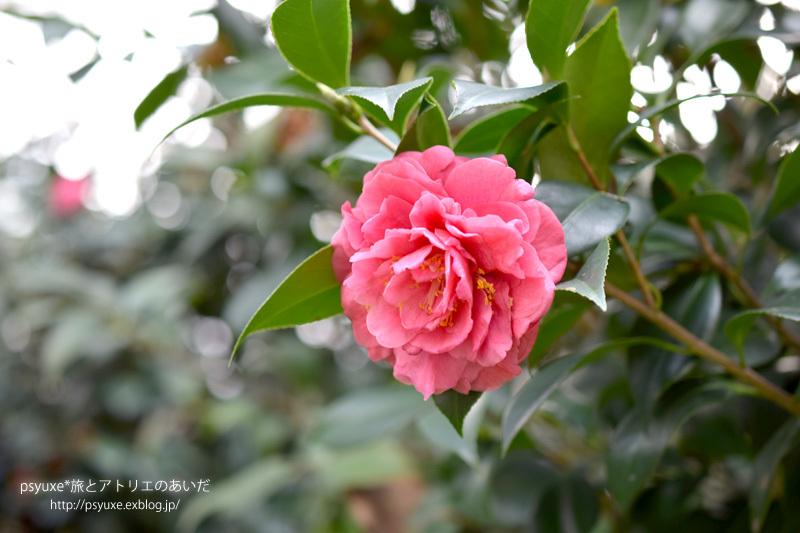 香港公園の茶具文物館へ行く_e0131432_17313215.jpg