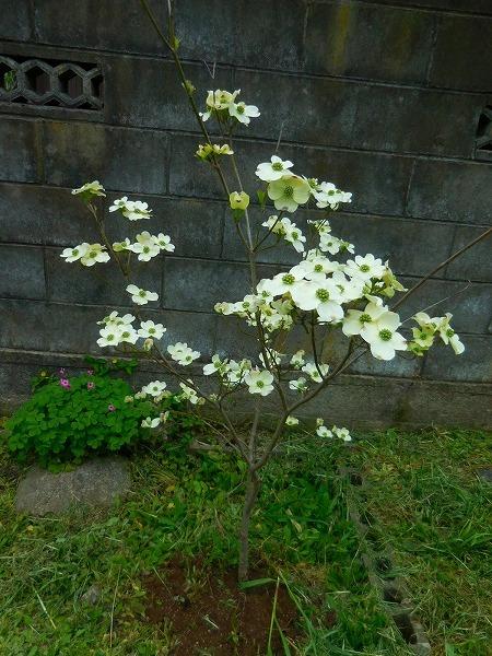 熊本の地震_c0327752_15205962.jpg