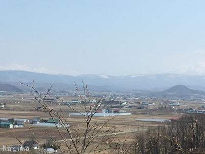 旭川・突硝山のカタクリ_e0326953_2340016.jpg