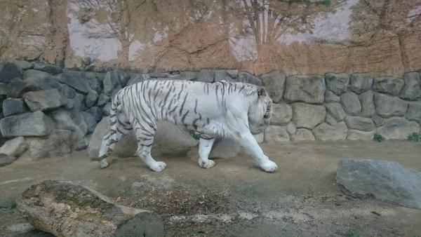 東武動物公園_e0040673_13385678.jpg