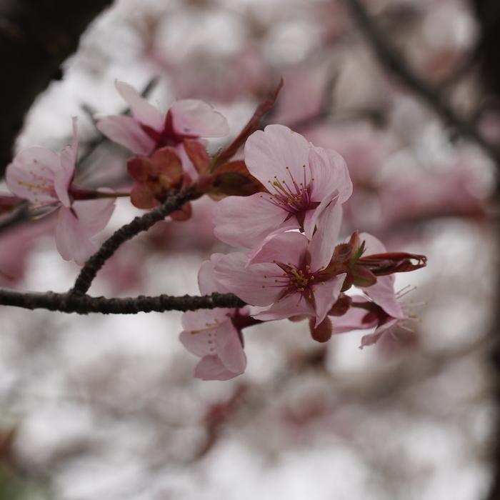 塩沢湖でお花見できちゃいました!_a0104074_0412440.jpg