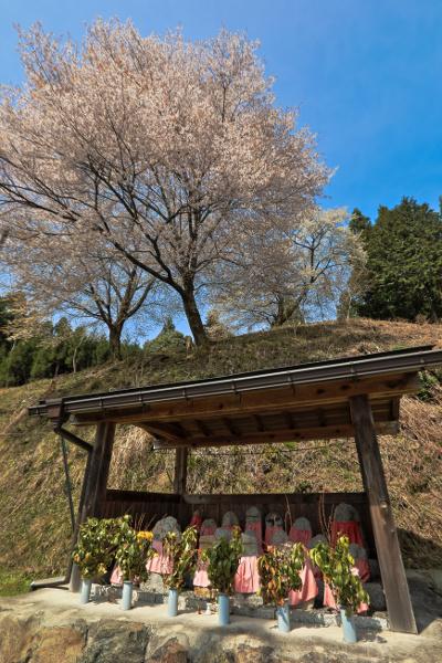 京北の桜_e0051888_601197.jpg