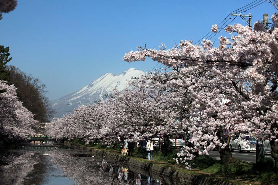 弘前公園の桜_f0150893_1827187.jpg