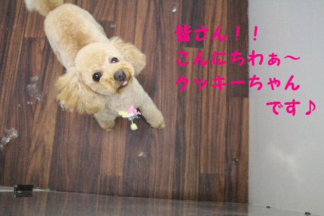 happy birthday♪_b0130018_18462491.jpg
