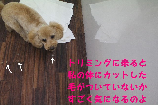 happy birthday♪_b0130018_18463787.jpg
