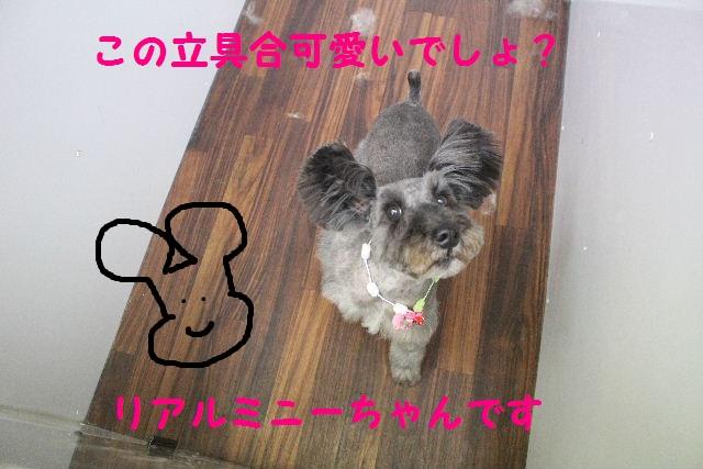 b0130018_21231760.jpg