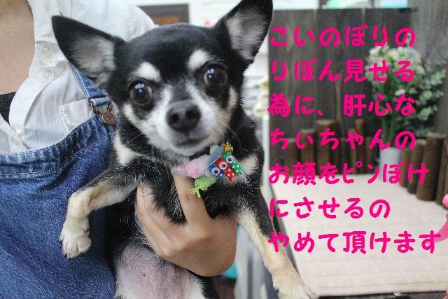 happy birthday♪_b0130018_814274.jpg