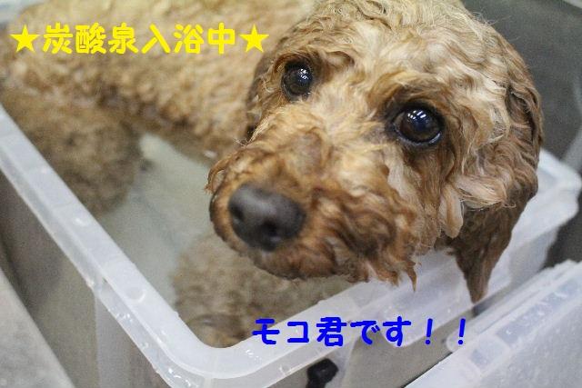 happy birthday♪_b0130018_8151448.jpg