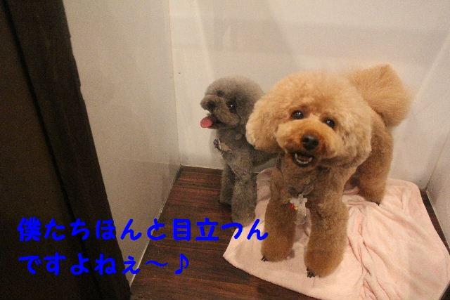 happy birthday♪_b0130018_8162834.jpg