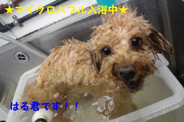 happy birthday♪_b0130018_818430.jpg
