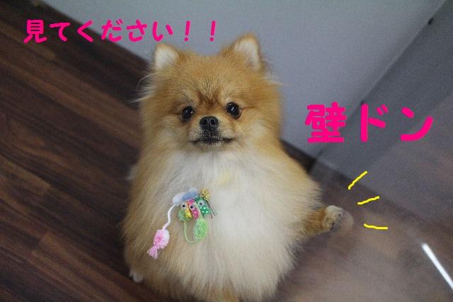 happy birthday♪_b0130018_87552.jpg