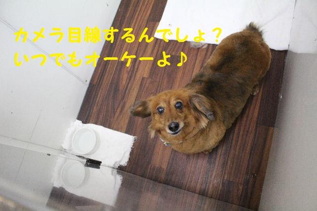 happy birthday♪_b0130018_894881.jpg