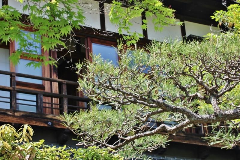 喜楽亭で楽しむ おいしい日本茶 4月_b0220318_21101213.jpg
