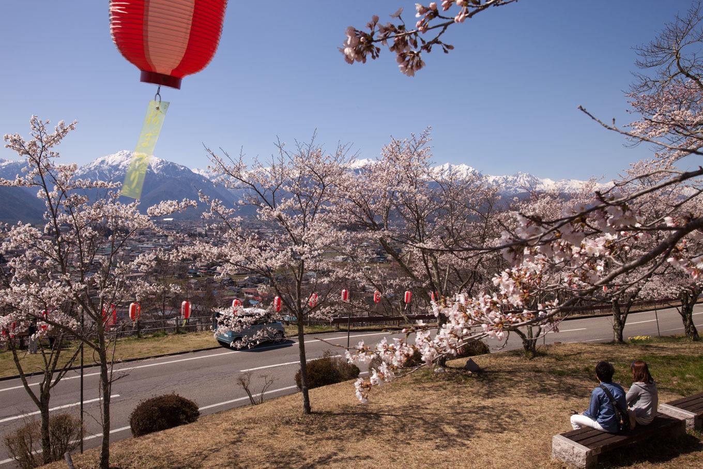 残雪の北アルプスと桜を楽しむ 大町公園_c0369219_14335430.jpg