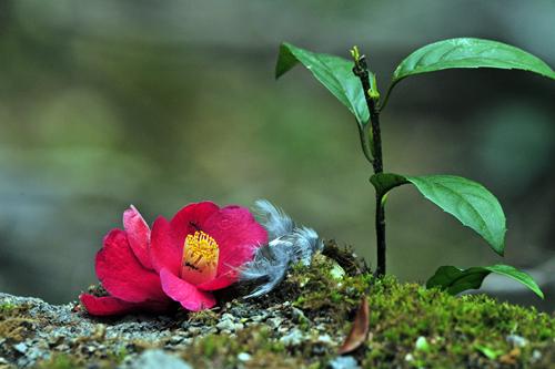 巡り合わせの妙!「花」爛漫。香り立つ、藤の花!_b0169522_23165781.jpg