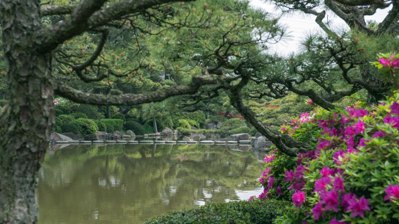 中津万象園のツツジ_d0246136_19185914.jpg