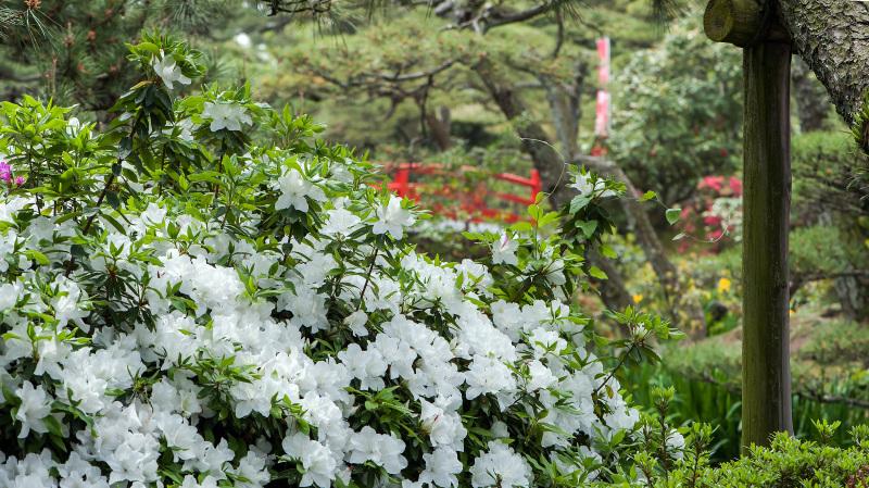 中津万象園のツツジ_d0246136_19194248.jpg