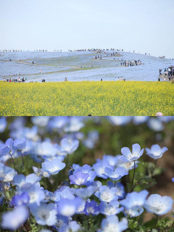 国営ひたち海浜公園_d0012237_09572985.jpg