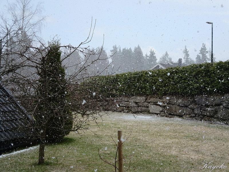 春の雪_a0353839_04132832.jpg