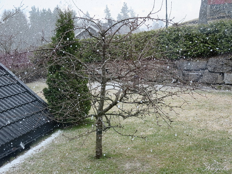 春の雪_a0353839_04134990.jpg