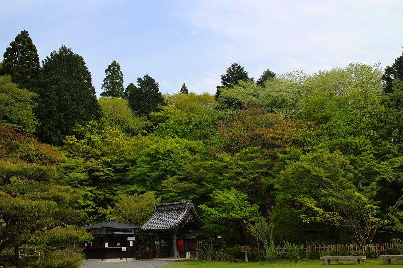 琵琶湖、湖東三山の一つ「百濟寺」20160423_e0237645_1430091.jpg