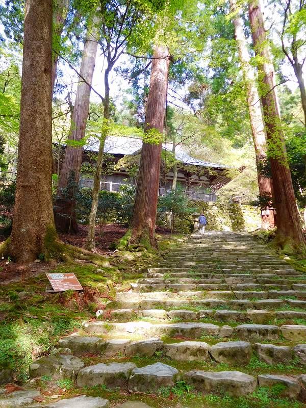 琵琶湖、湖東三山の一つ「百濟寺」20160423_e0237645_14344884.jpg