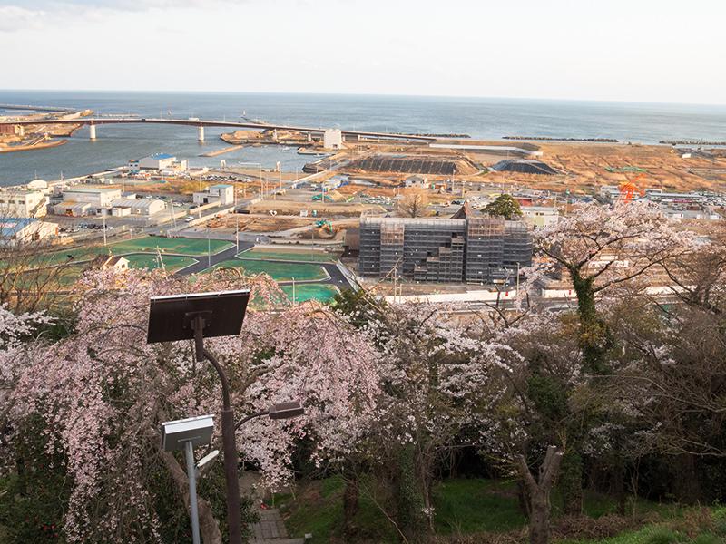 行くぜ、東北!01 石巻の桜_a0003650_20155255.jpg