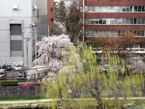 春の新着!Ⅴ ~ザ・ニッポンラグジュアリー~ 【SHATIHOKO】の素 編_c0177259_39575.jpg