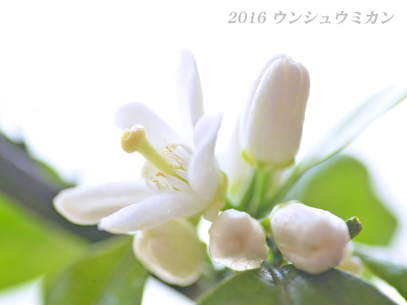 d0251161_13371423.jpg