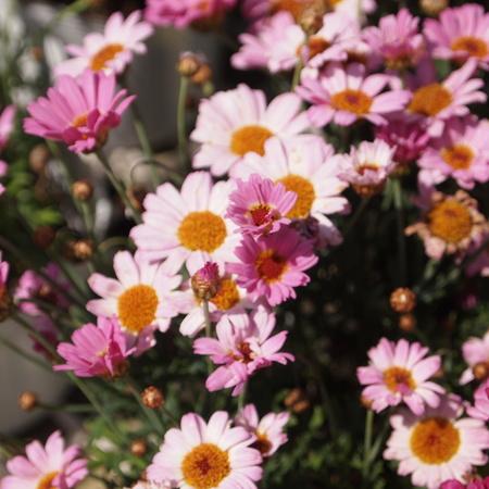 いよいよ春です!_a0292194_21525949.jpg