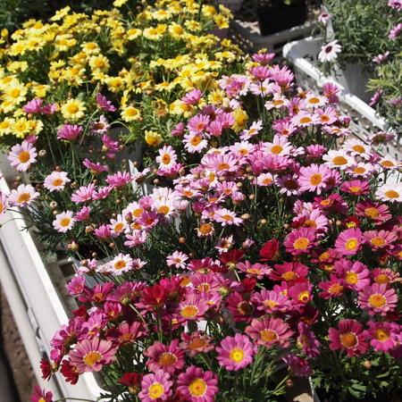 いよいよ春です!_a0292194_2155158.jpg