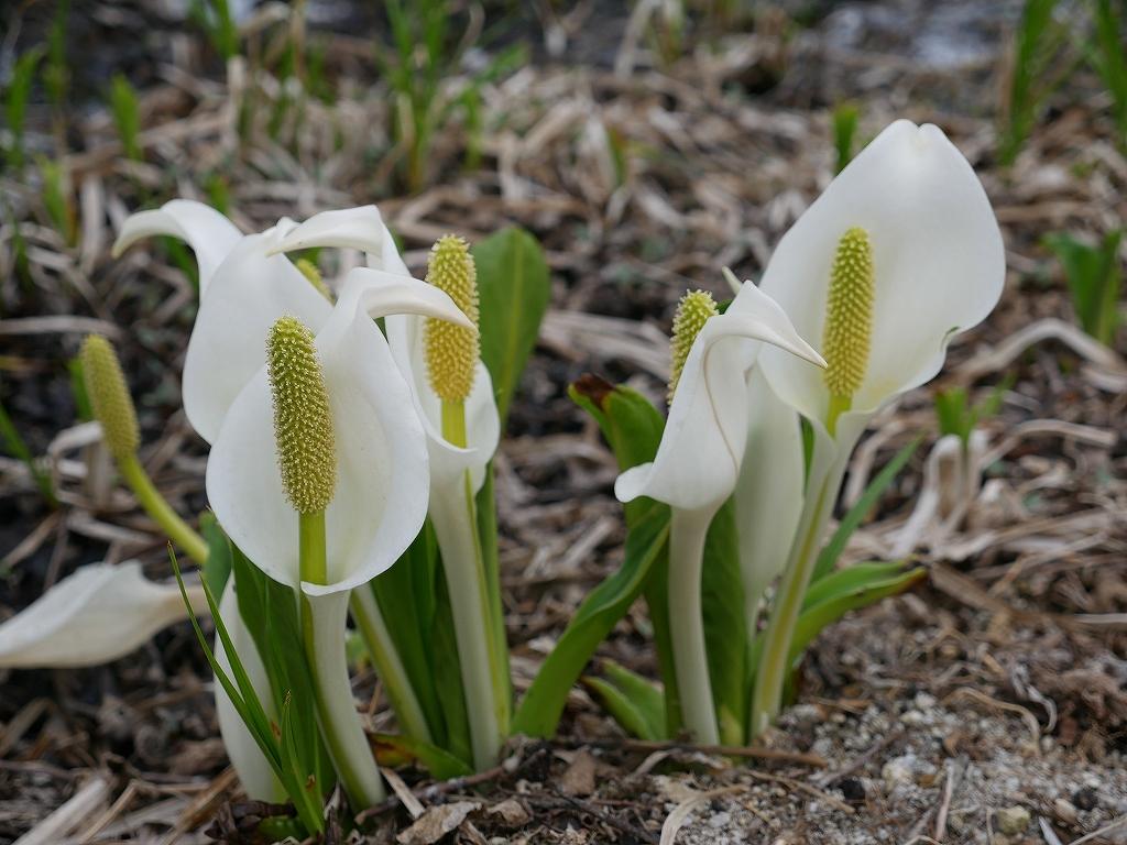 花の時期到来_f0138096_2205897.jpg