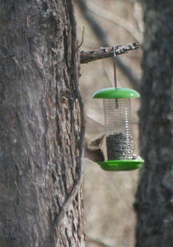 ようやく春が来て「森のカフェ」オープン♪_c0090198_9111847.jpg