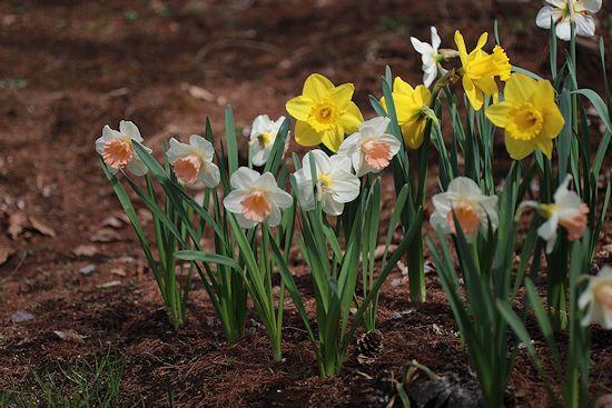 ようやく春が来て「森のカフェ」オープン♪_c0090198_931716.jpg