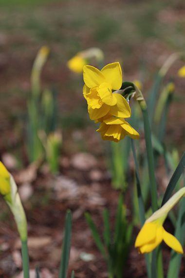 ようやく春が来て「森のカフェ」オープン♪_c0090198_94074.jpg