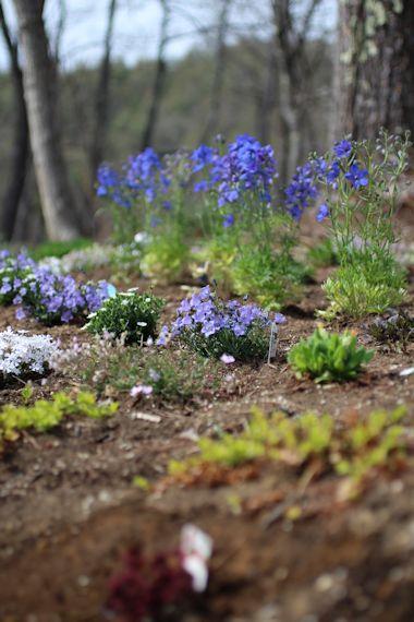 ようやく春が来て「森のカフェ」オープン♪_c0090198_965529.jpg