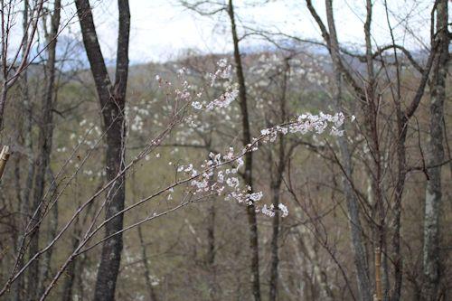 ようやく春が来て「森のカフェ」オープン♪_c0090198_983898.jpg