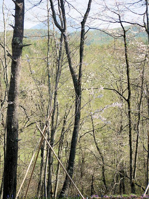 ようやく春が来て「森のカフェ」オープン♪_c0090198_991731.jpg