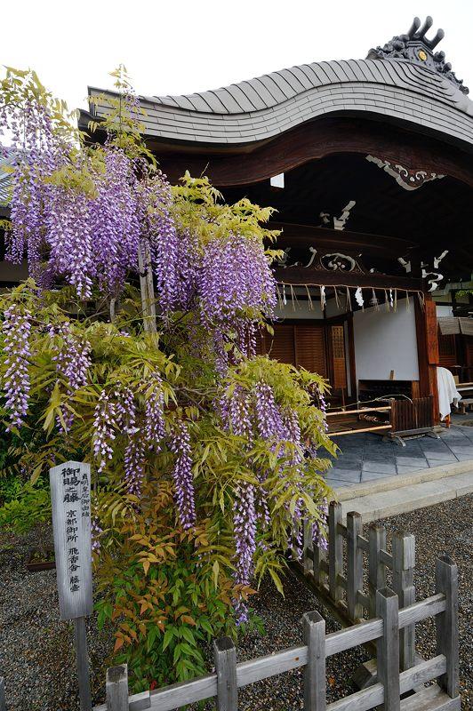 藤の花@春日神社_f0032011_19412388.jpg