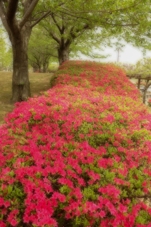 花と新緑_c0220824_15355157.jpg