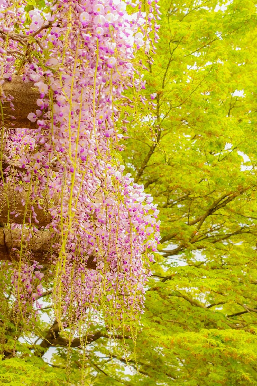 花と新緑_c0220824_15355518.jpg