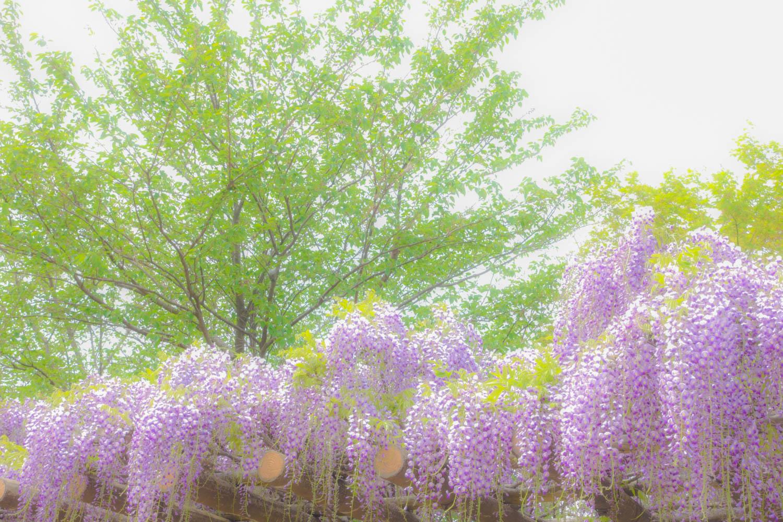 花と新緑_c0220824_15355840.jpg