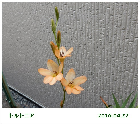 e0033229_1913994.jpg