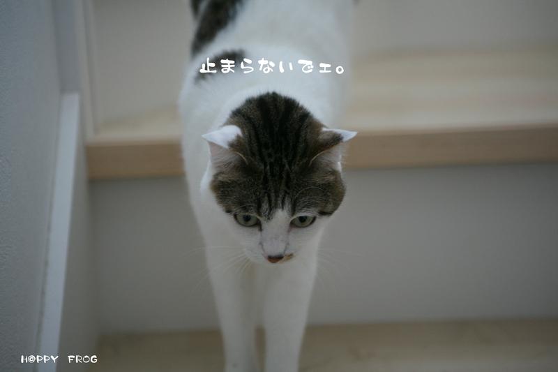 f0032042_4295654.jpg