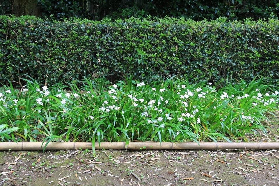 嵐山を歩くその1 ~野々宮神社、大河内山荘~_a0107574_19002530.jpg