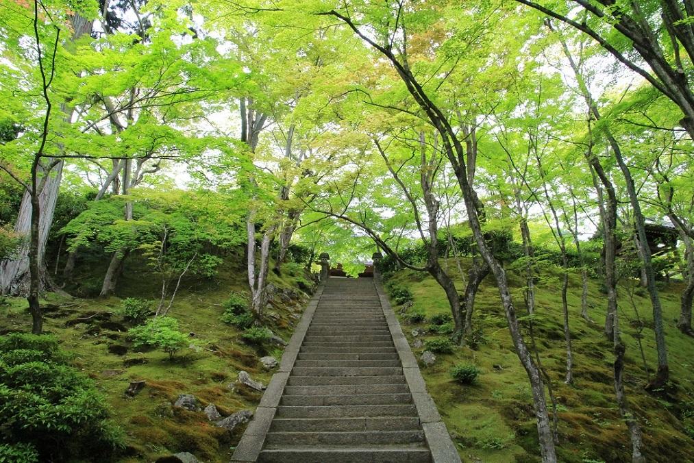 嵐山を歩くその2  ~常寂光寺、ミュージアム季朝~_a0107574_20031927.jpg