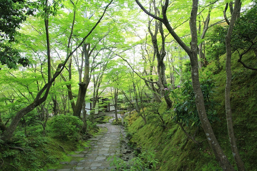 嵐山を歩くその2  ~常寂光寺、ミュージアム季朝~_a0107574_20033110.jpg