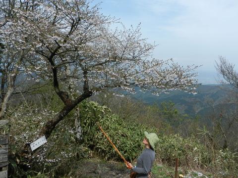 箱根・金時山の花  vol.84_e0024094_11563461.jpg