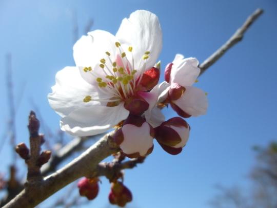 小樽の春_b0198109_22180031.jpg